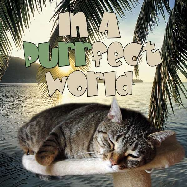 In A Purrfect World – a perfect world for cats on Pet Life Radio (PetLifeRadio.com)