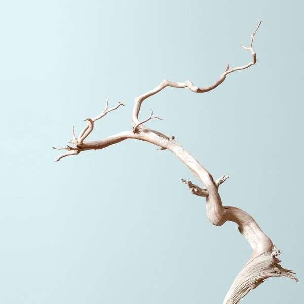 Bonsai Mirai: Asymmetry