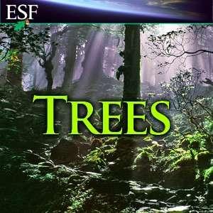 Trees – Donald J. Leopold