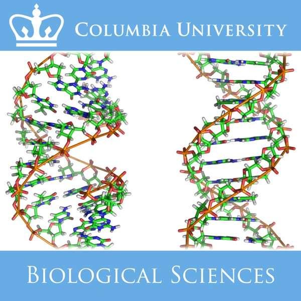 Introductory Biology – Deborah Mowshowitz, Lawrence Chasin