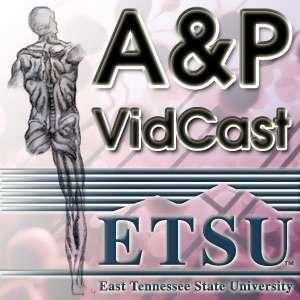 Anatomy & Physiology VidCast – Audios – Dr. Allan Forsman Health Sciences