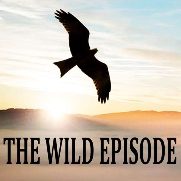 The Wild Episode